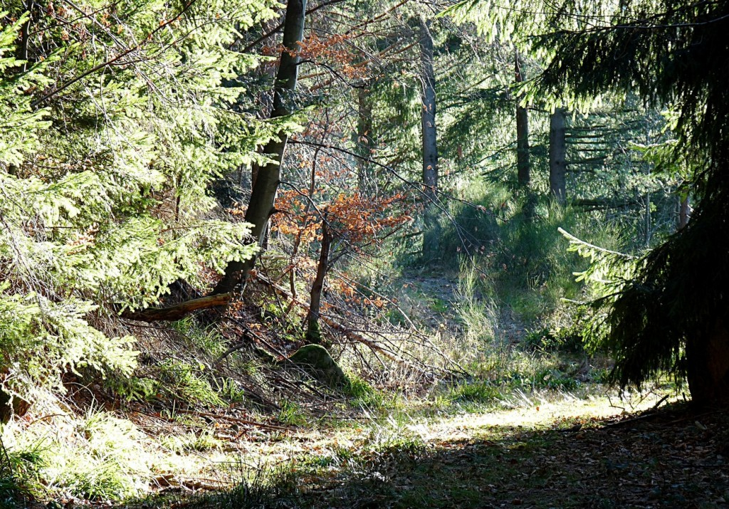 18_Der_Wanderpfad_im_schönen_Herbstlicht