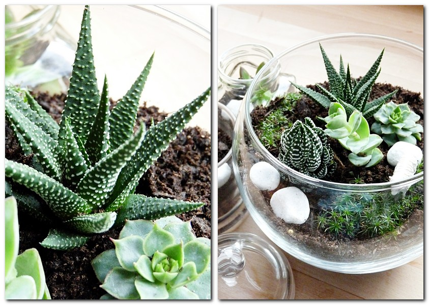 mini terrarium mit sukkulenten my morningsun. Black Bedroom Furniture Sets. Home Design Ideas
