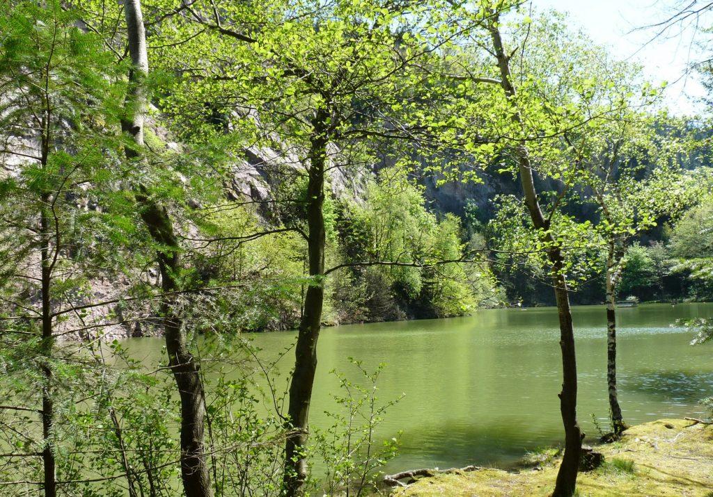 10_Blick durch die Bäume auf den Steinbruchsee