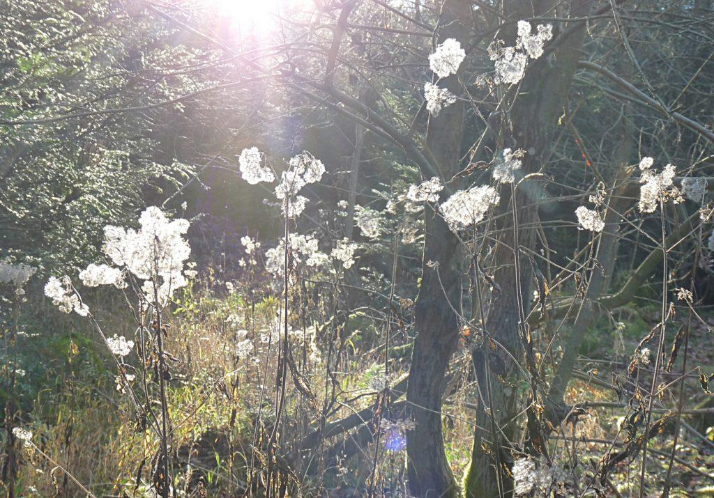 puschelblumen-wandern-macht-gesund-und-fit