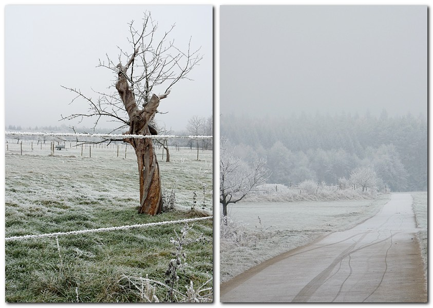 baum-im-gefrorenen-nebel