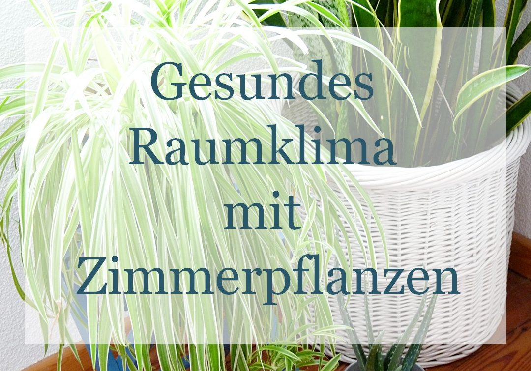gesundes raumklima mit zimmerpflanzen my morningsun. Black Bedroom Furniture Sets. Home Design Ideas