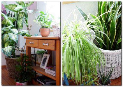 zimmerpflanzen f r ein gesundes raumklima und gute luft my morningsun. Black Bedroom Furniture Sets. Home Design Ideas