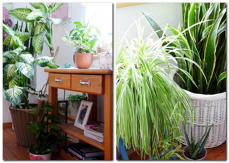Pflanzen Für Gesundes Raumklima : gesundes raumklima mit zimmerpflanzen my morningsun ~ Indierocktalk.com Haus und Dekorationen