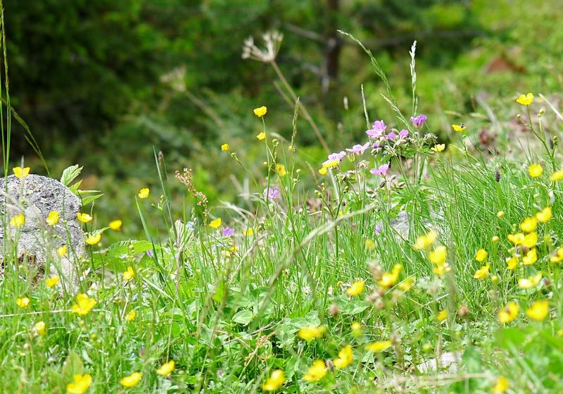 10_Blumen
