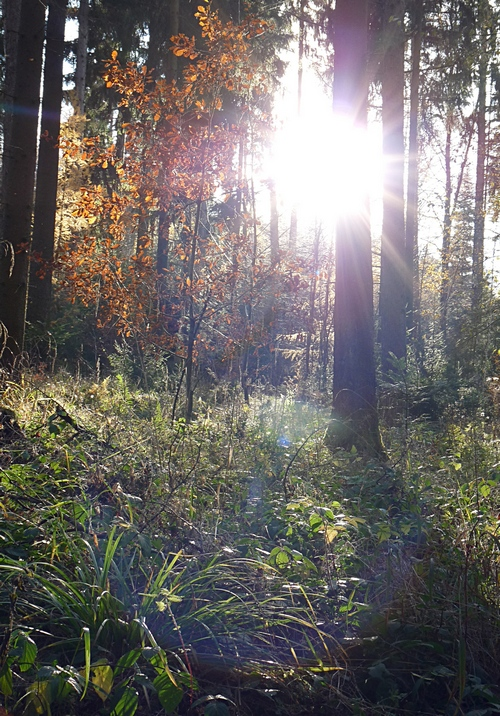 wie schön - Herbstlicht