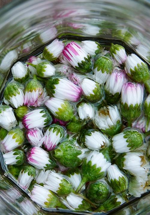 Rezept für Gänseblümchensalbe