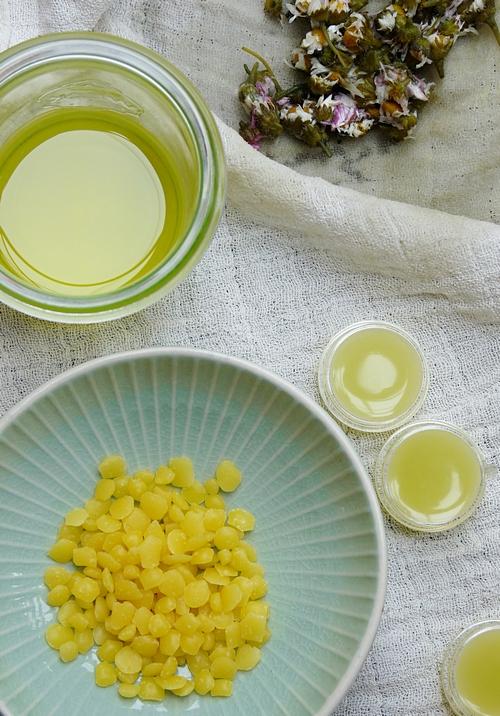Salbe aus Gänseblümchen mit drei Zutaten
