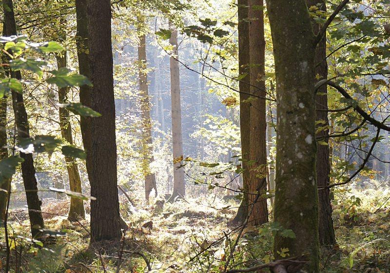 wundervolles Licht im Wald