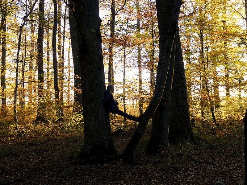 6_Ittersbacher Wald_1