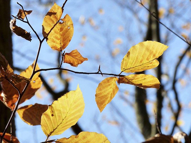 8_Herbstblätter_1