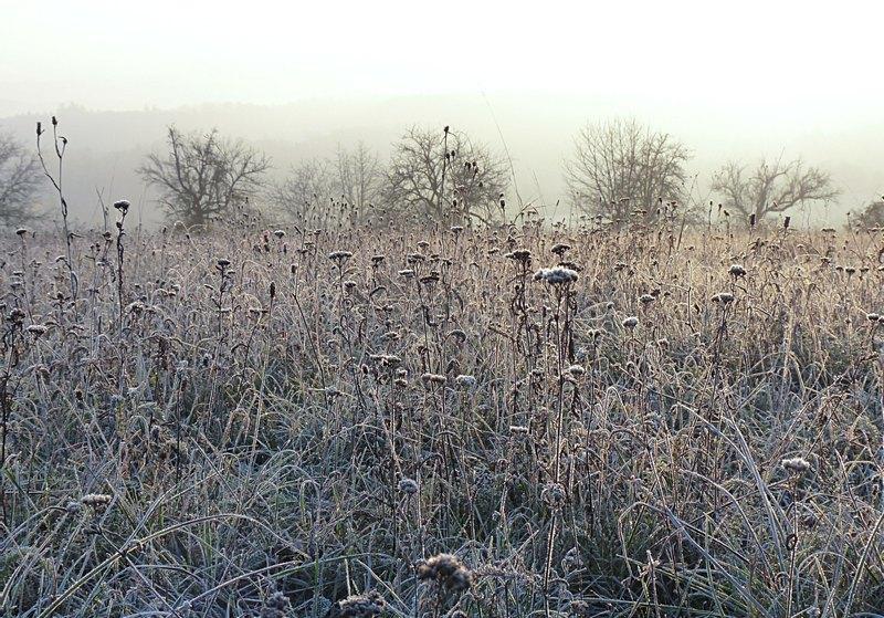 gefrorene Wiese im Morgennebel