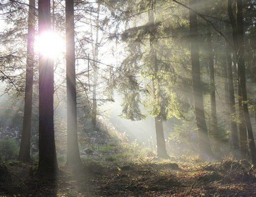 mystische Stimmung im Wald