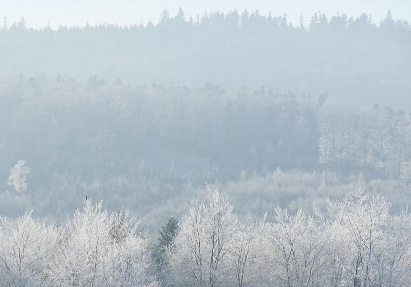 gefrorener Wald