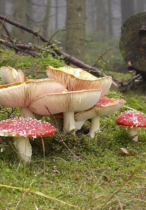 Herbst Pilze Wald Moos