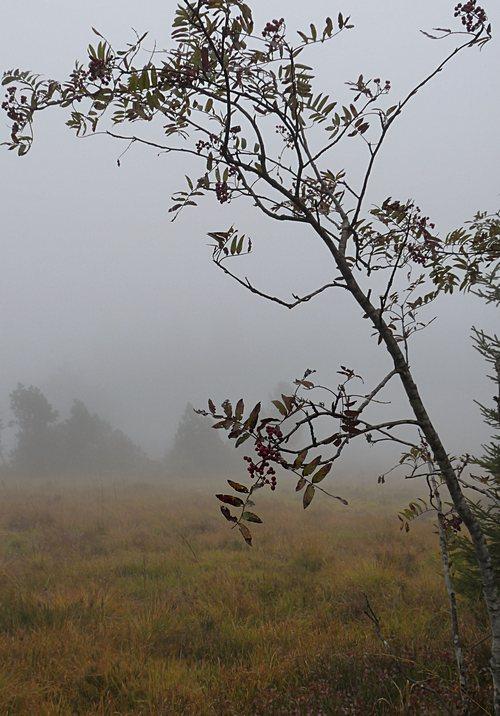 Schliffkopf bei Nebel