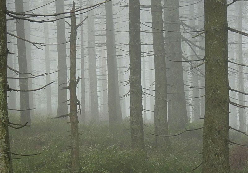 Schwarzwald Nebelstimmung