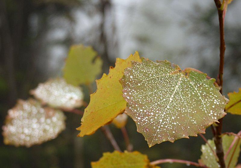 bunte Herbstblätter mit Tautropfen vom Nebel