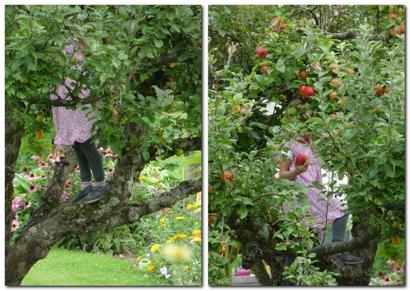 Im Apfelbaum