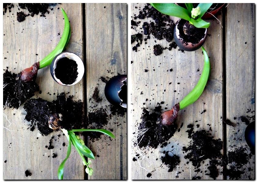 2_Ostereier bepflanzen
