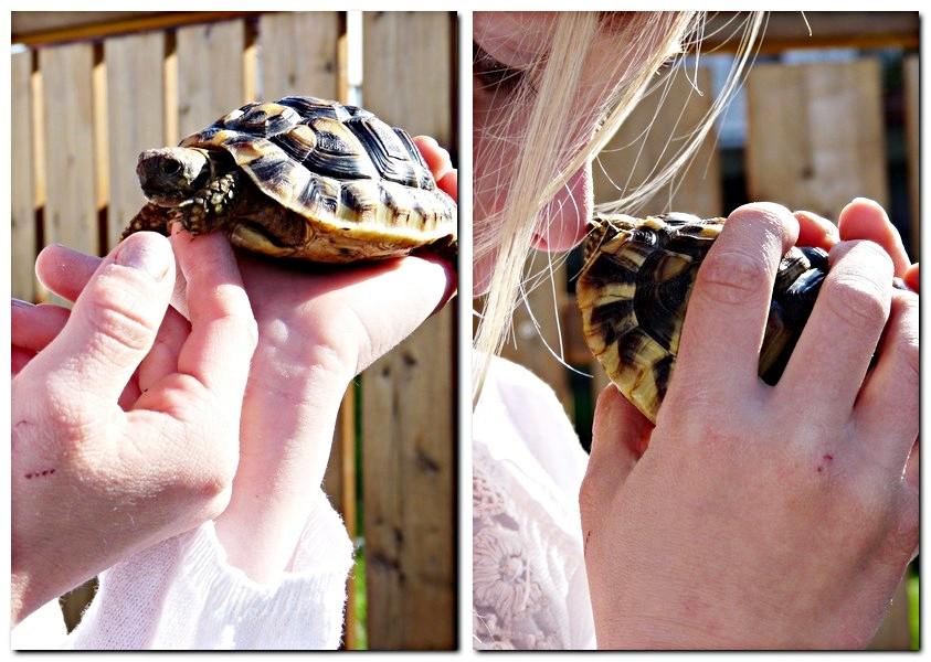 1_1_Robin und Schildkröte