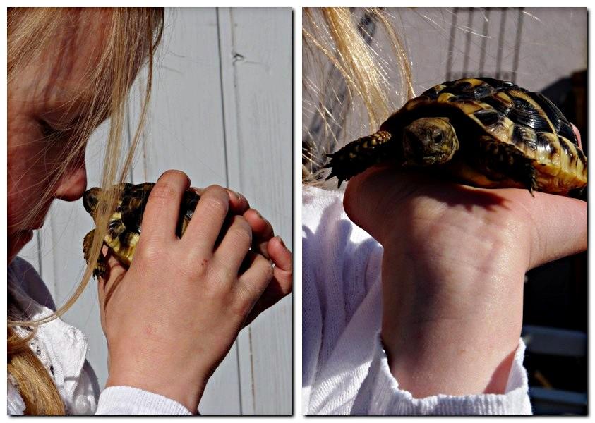 1_Robin und Schildkröte