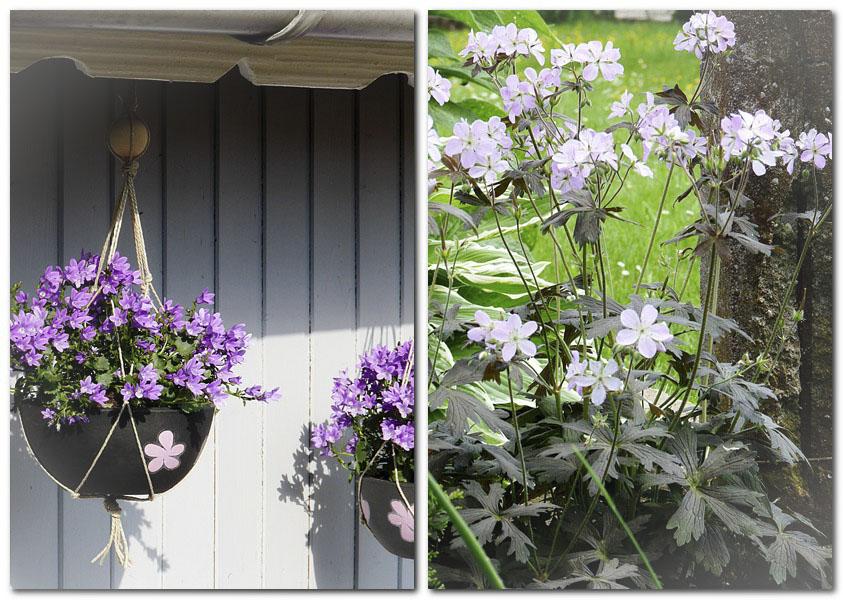 3_Lila Blumen und Storchschnabel bei Mauer_1