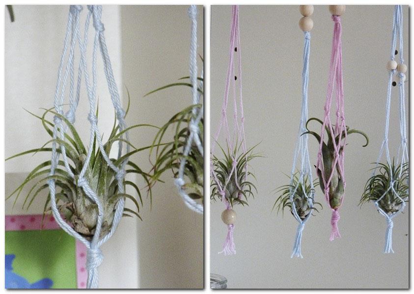 Tillandsien als kleine Blumenampeln zum aufhängen