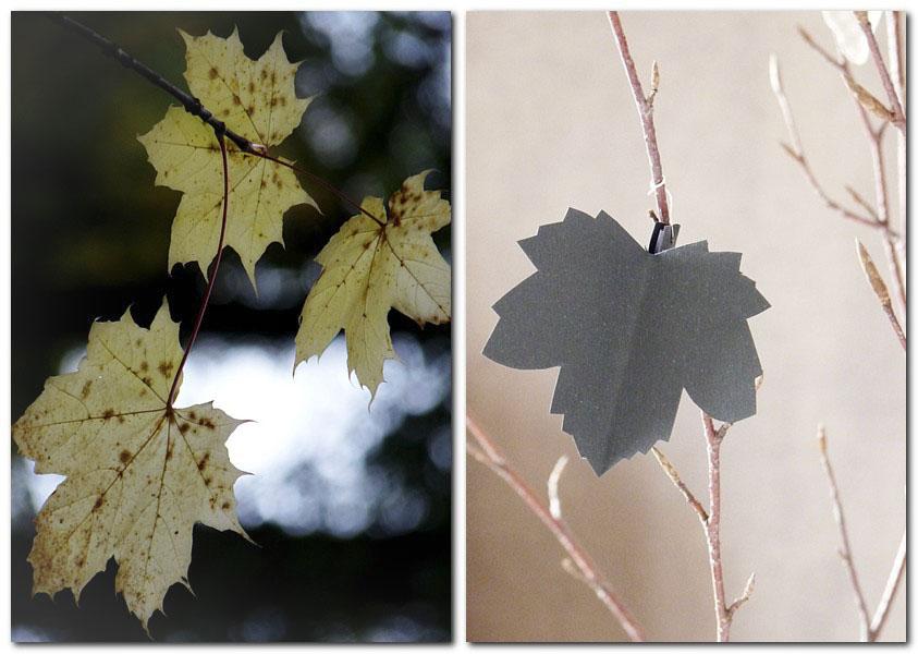 Ahornblatt an Ideenbaum