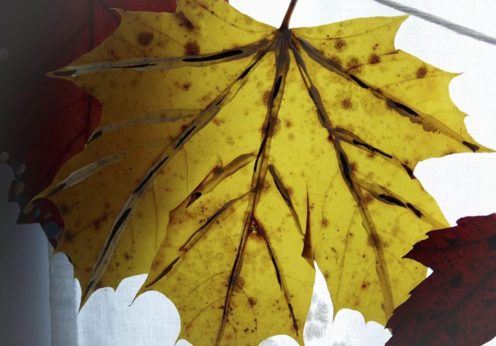 Herbstblätter am Fenster