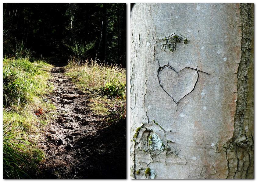 20_Ein_wunderschöner_Wanderweg_und_ein_in_die_Rinde_geritzes_Herz