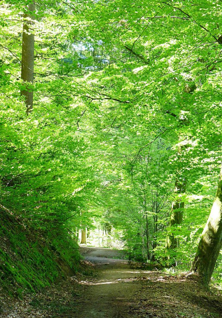 4_Ein wunderschöner Wanderweg im Frühling