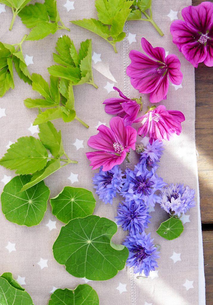Malvenblüten Kornblumen junge Blätter vom Giersch und Kapuzinerkresse
