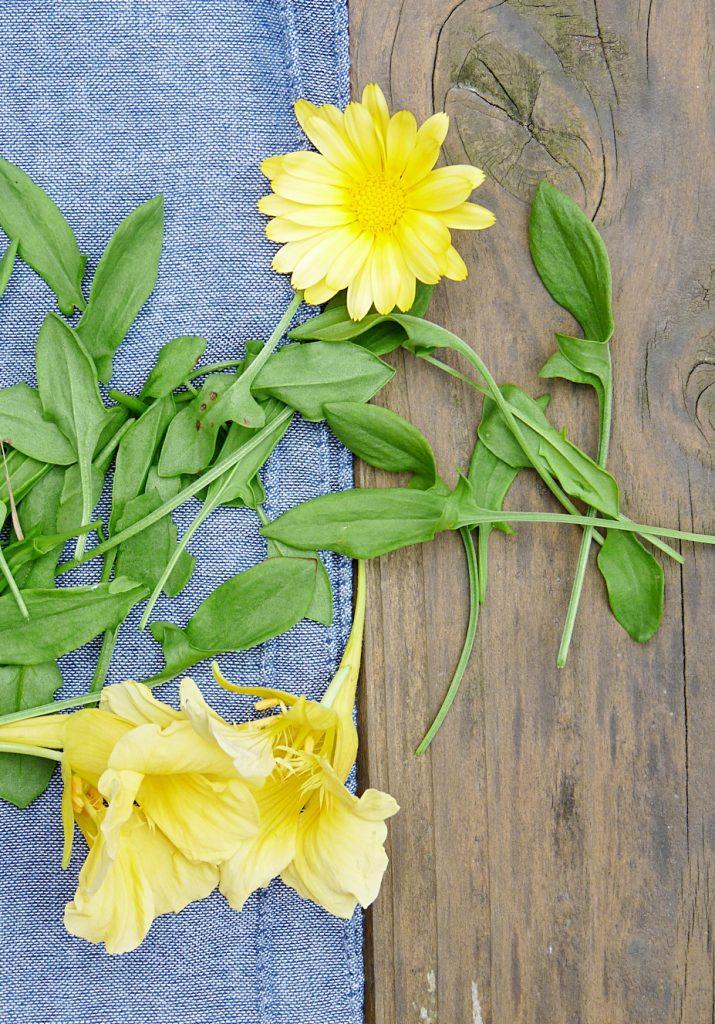 Sauerampfer Ringelblume und Blüten von der Kapuzinerkresse