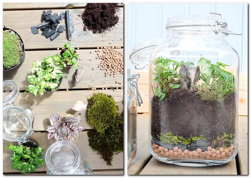 So richtet ihr eure Biosphäre im Einmachglas ein