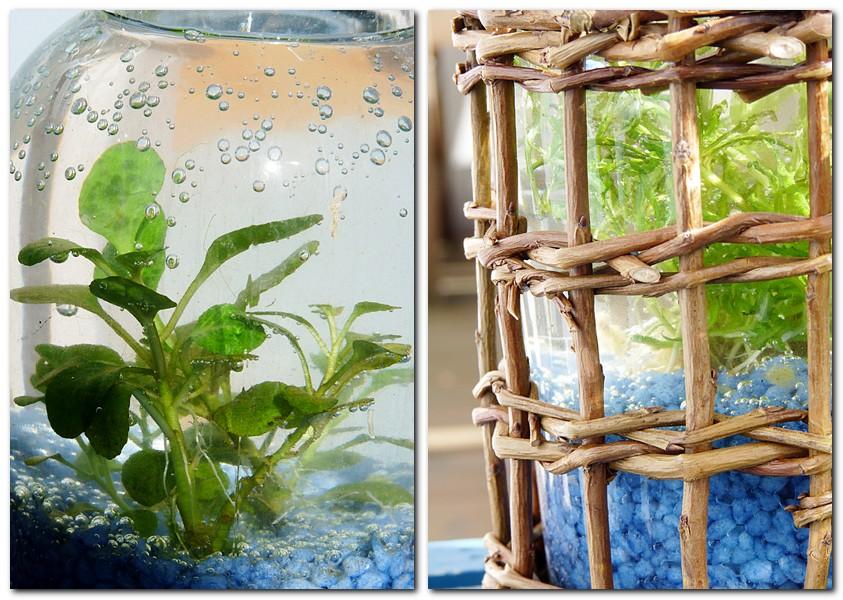 Wasserpflanze in der Flasche DIY