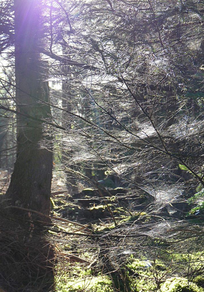ein-ganzer-baum-voller-spinnweben-im-altweibersommer