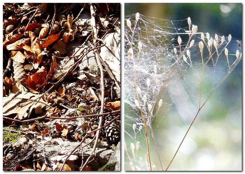graeser-mit-spinnweben-altweibersommer