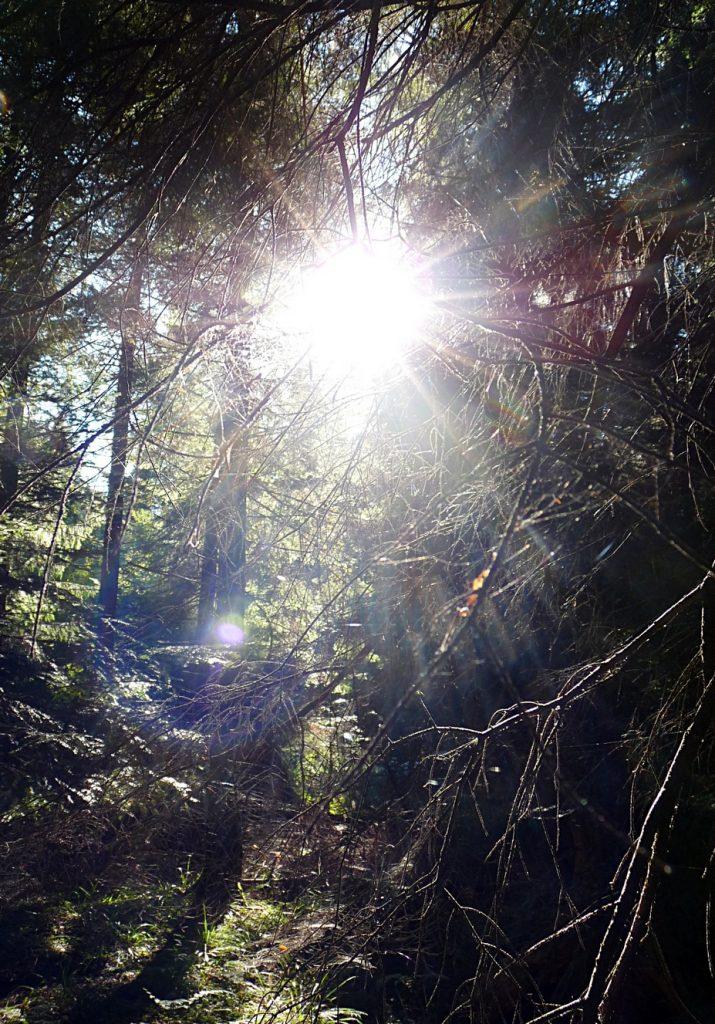 wunderschoenes-herbstlicht
