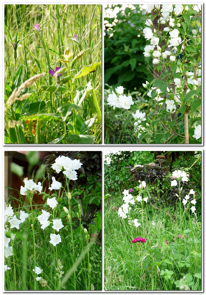 Meine Blumenwiese im Mai