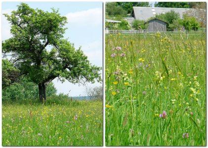 Blumenwiese - warum spielt der mensch