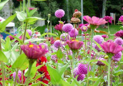 diese herrlichen Farben im Blumenbeet