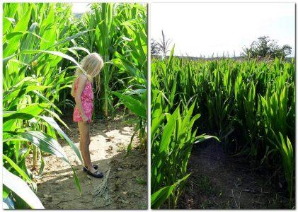 Robin im Maislabyrinth Brötzingen