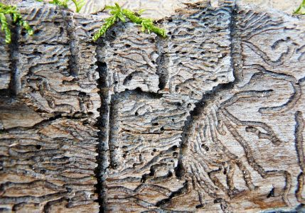 9_Das waren Holzwürmer