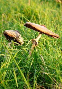 21_Pilze im grün erste hilfe Rucksack