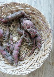 Süßkartoffelernte