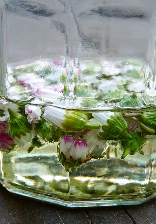 Gänseblümchensalbe mit Mandelöl