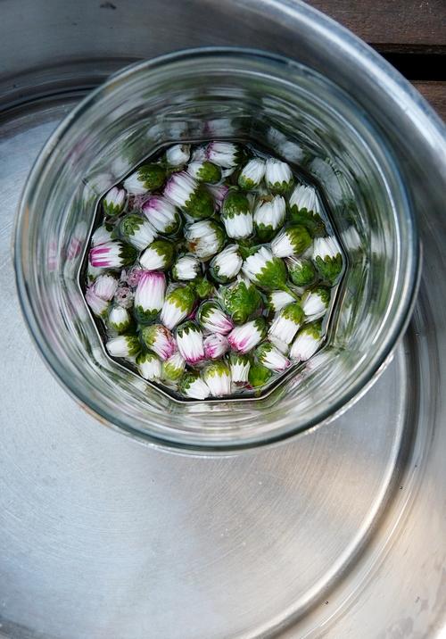 Rezept für Gänseblümchensalbe selber machen