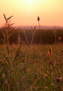 Blumenwiese in frühen Licht