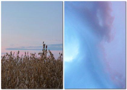 Kornfeld und Wolke